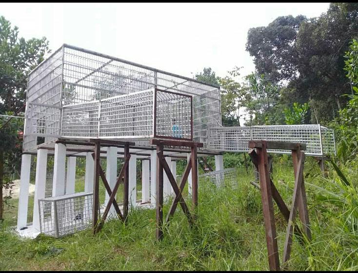 der dritte Käfig wird fertig! ®Sintang Orangutan Center