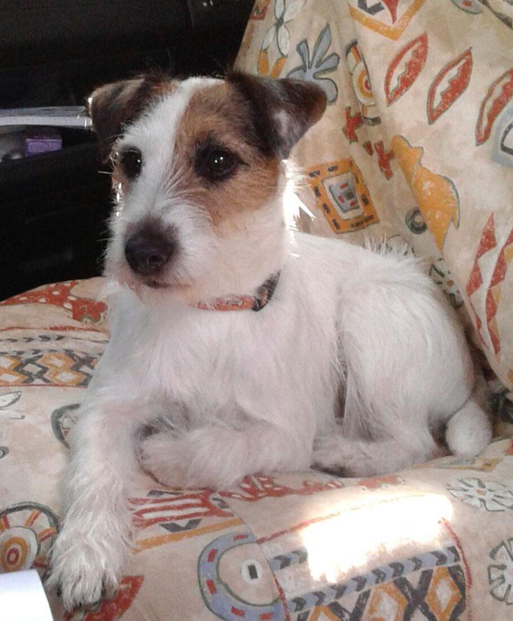 Stella auf Ihrem Lieblingsplatz im Wohnmobil