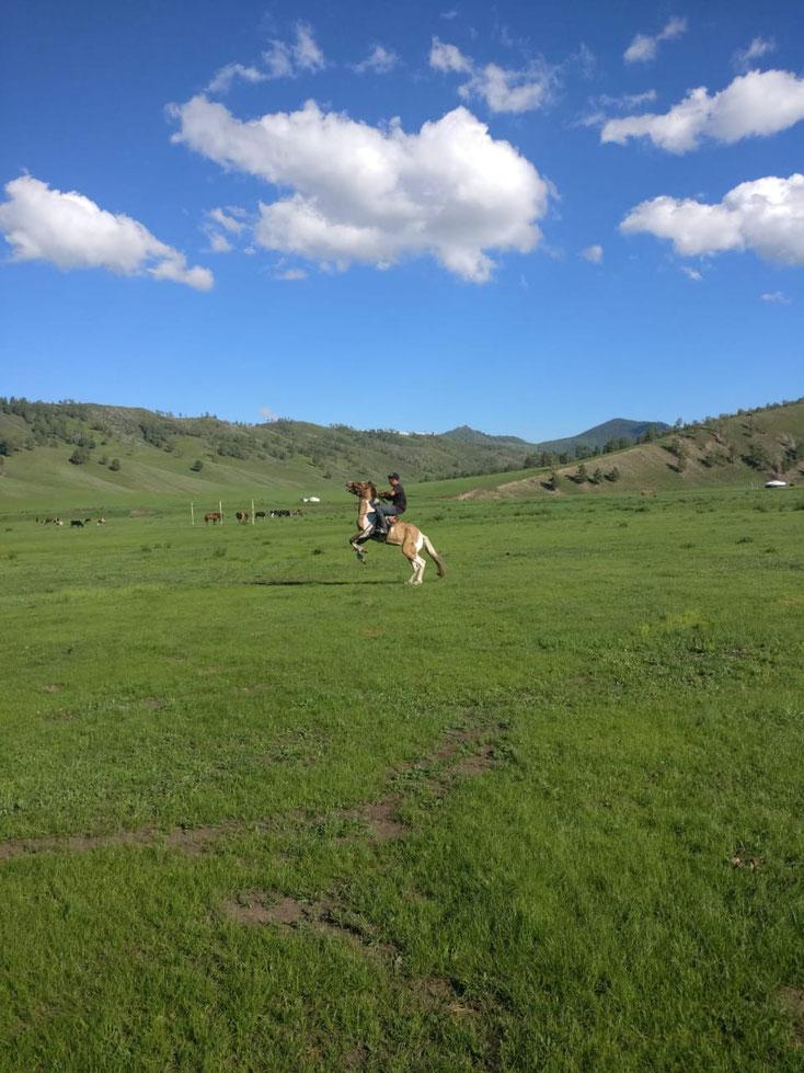 Pferde sind grösstenteils wild. Sie werden nur geritten, weil man die als Transportmittel anstatt eines Autos braucht