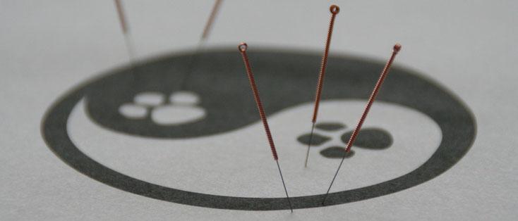 Akupunktur - Tierheilpraxis Stephanie Scheucher