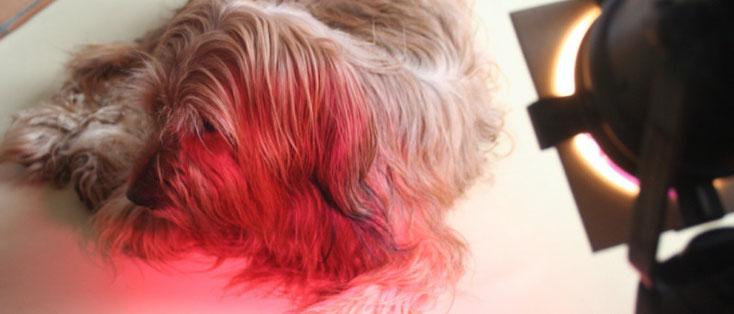 Farblichttherapie - Tierheilpraxis Stephanie Scheucher