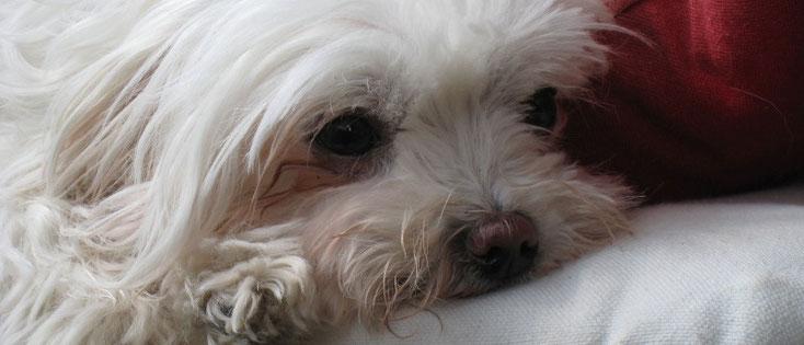 Magnetfeldtherapie - Tierheilpraxis Stephanie Scheucher
