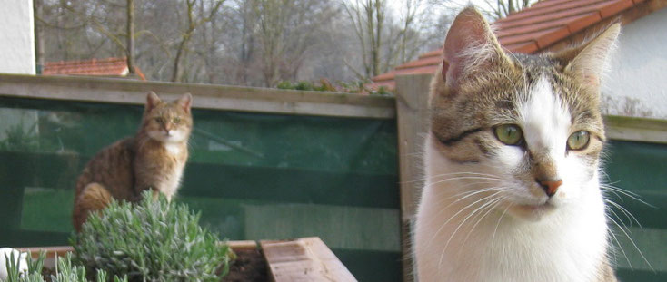 Bachblüten - Tierheilpraxis Stephanie Scheucher