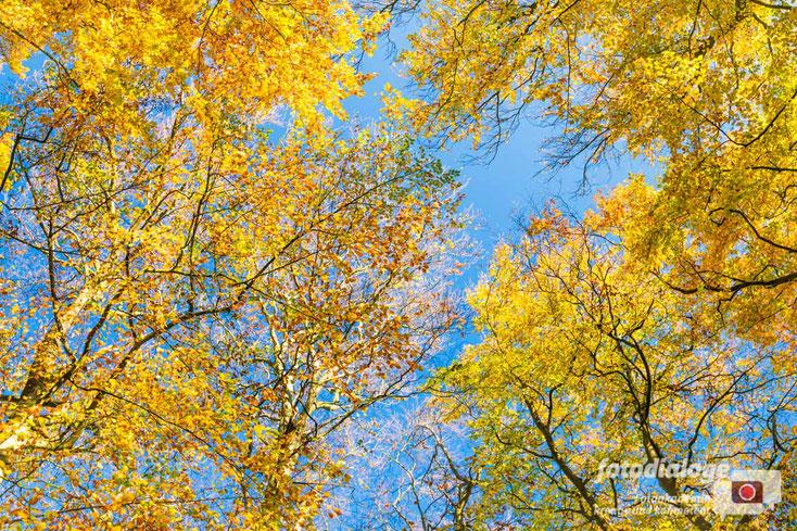 Der Goldene Schnitt, in der Herbstfotografie ist die Bildgestaltung und richtige Bildkomposition wichtig.