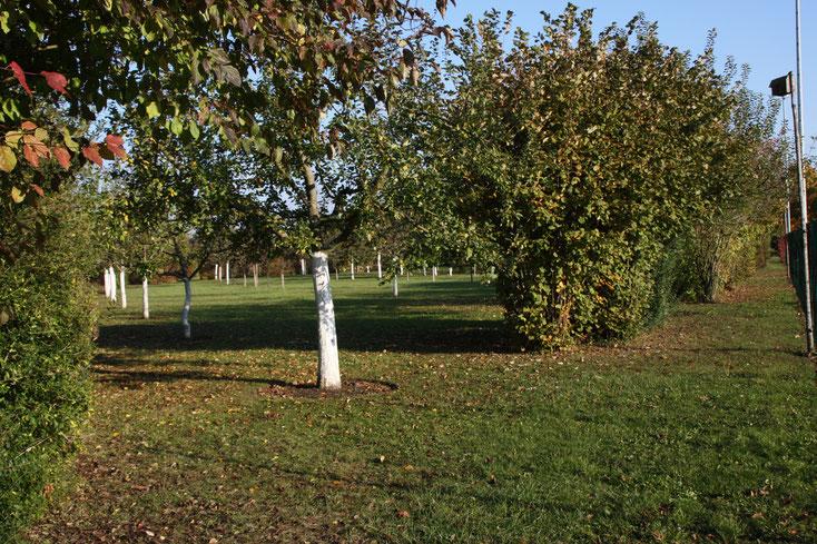 Die Streuobstwiese aus einer anderen Perspektive - Herbst 2009 - Foto: Hans Koch