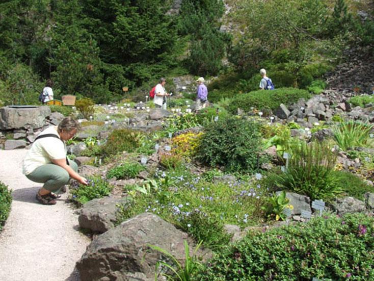 Gebirgsflora im Mittelgebirge - Schaugrten bei Oberhof