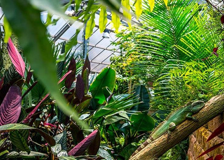 Außer den Tropenpflanzen ist auch eine kleine Echse im Bild zu sehen.