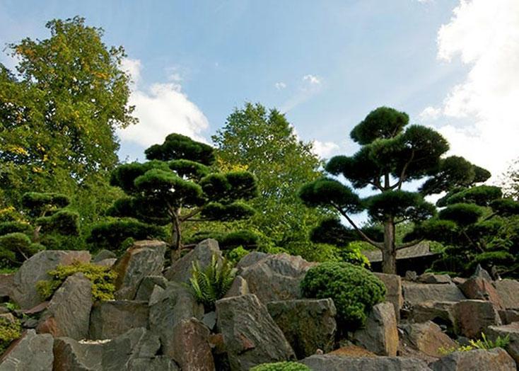 """In Form geschnittene Bäume, dazwischen Granitsteine und """"Begleitgrün"""""""