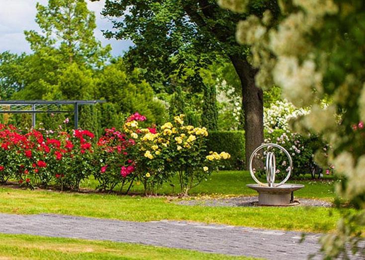 Blühende Strauchrosen am Weg durch den Rosengarten