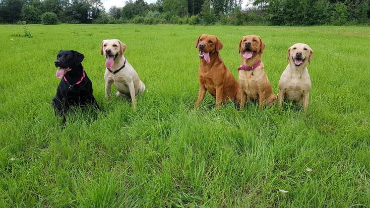 Leila mit Temi (A-Wurf), Oliver, Beasley und Kelea