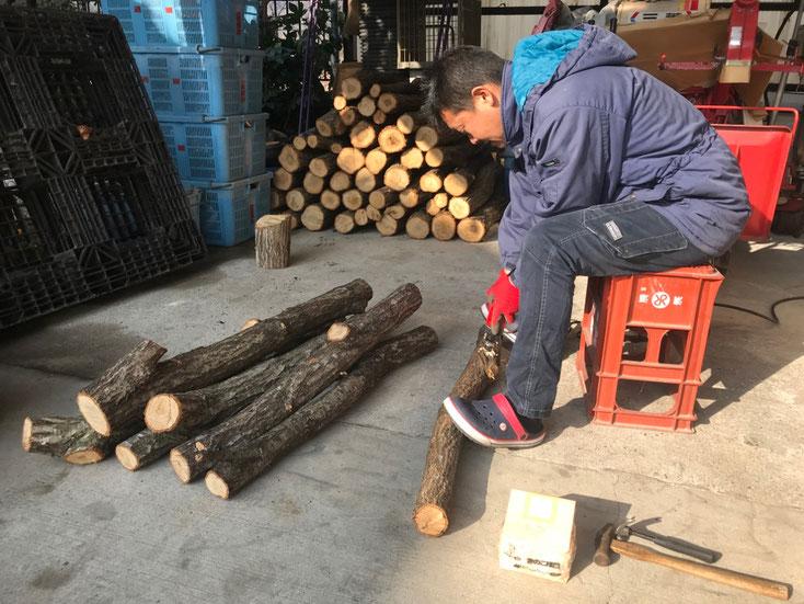 玉切りした原木にドリルで穴あけ