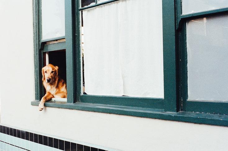 Geprüfter Stadthund, gutes Benehmen in der Stadt