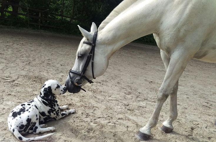 Jackson Five vom Furlbach 5 Monate alt...Küsschen für seinen Kumpel...17 Juli 2016