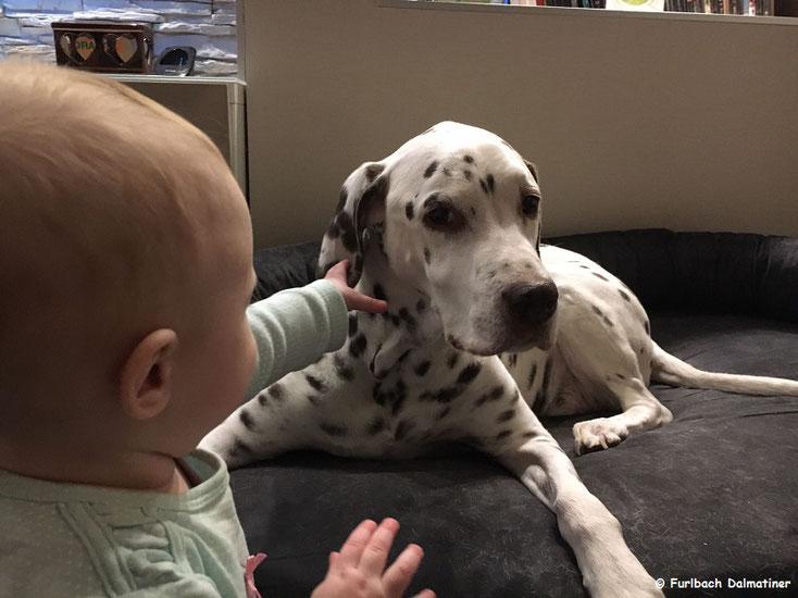 Ares vom Furlbach mit seiner kleinen Freundin Emilia...16 Dezember 2016
