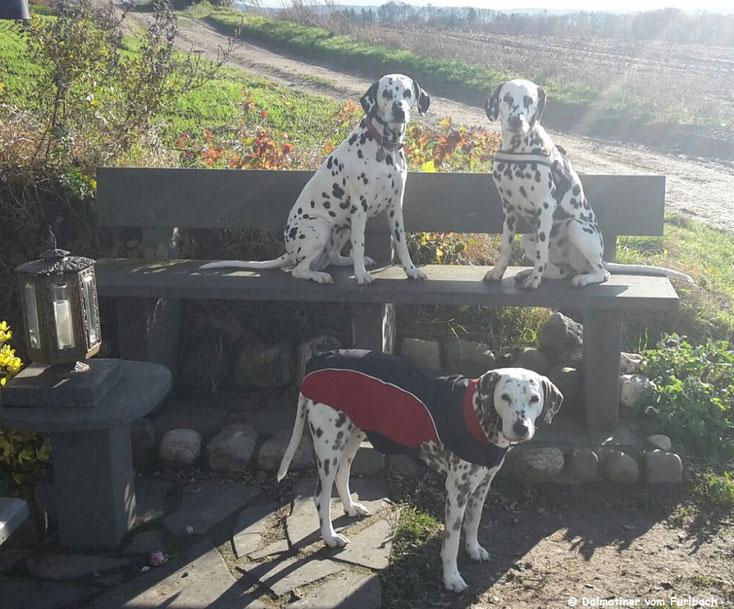 Auf der Bank sitzend links Cassiopeia vom Sayner Schloß (Cassi) und rechts Just Bonny vom Furlbach (Bonny)...stehend Angie vom Furlbach...20.11.2016