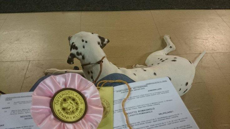 Kryddhundens Ice Cream (Glassie) LUA erreichte auf Ihrer ersten Ausstellung das BOB wir sind mega stolz auf Ice-T´s Tochter...22.11.2016