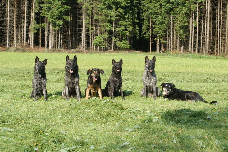 Kaylee ( Sky's Mama), Sky, Rocky, Fiby, Layla ( Halbschwester von Sky) und Kira
