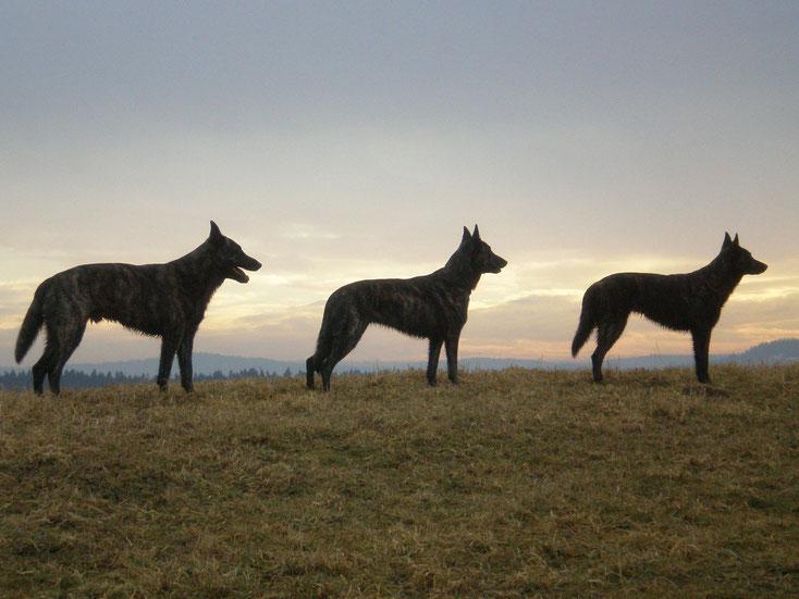 Sky, Kaylee und Fiby
