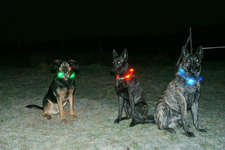 So sind unsere Hunde im Dunkeln seeehr gut zu sehen und wir wissen durch die Farbe, wer wo ist;o) Das bekamen sie von Andreas zu Weihnachten. Fiby hatte ihr's zwar schon früher, zählt aber trotzdem!!!