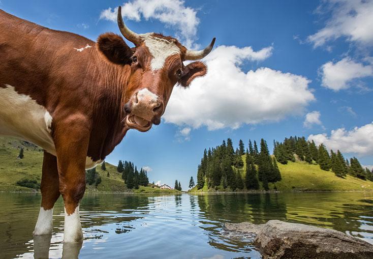 hormone in Milch ungesund