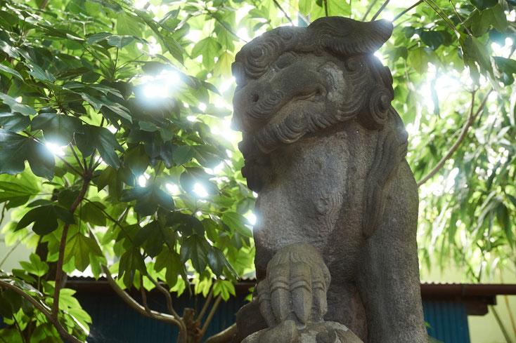 戸越八幡の狛犬。