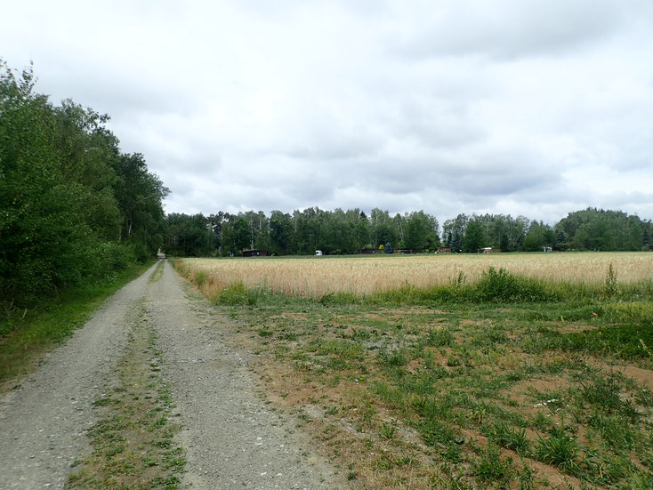 Gleich nach dem Campingsplatz beginnt der Feldweg zum Gassigehen. Entweder für das kurze Morgen-Gassi oder den langen Spaziergang perfekt!