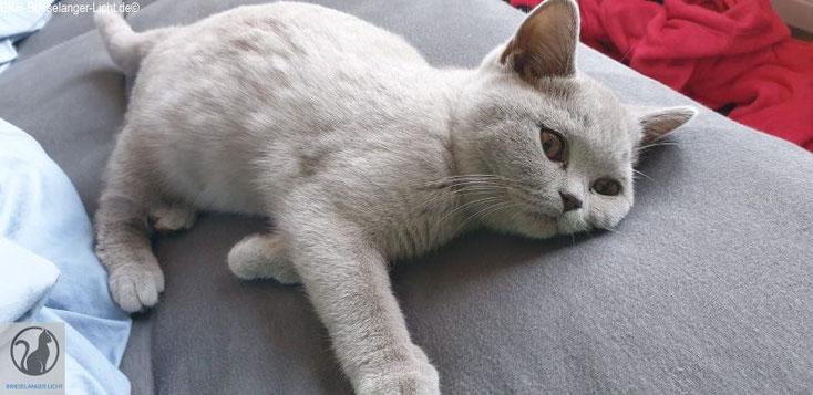Unsere kleine graue Maus. Sie ist geimpft und mehrfach entwurmt vom Tierarzt. Sie fühlt sich wohl zuhause