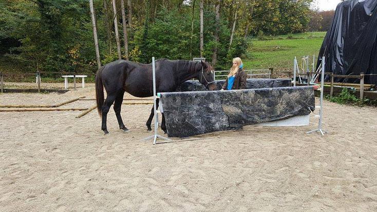 Passage étroit - Désensibilisation et gestion de la peur du cheval