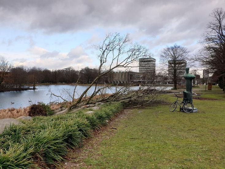 Sturmschaden, Baum umgefallen
