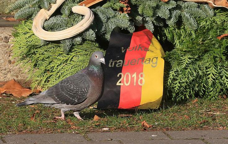 Taube vor Kranz (Volkstrauertag)