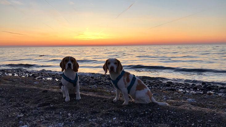 Blanda & Elja am Weststrand der schönen Insel Fehmarn im Herbst 2019