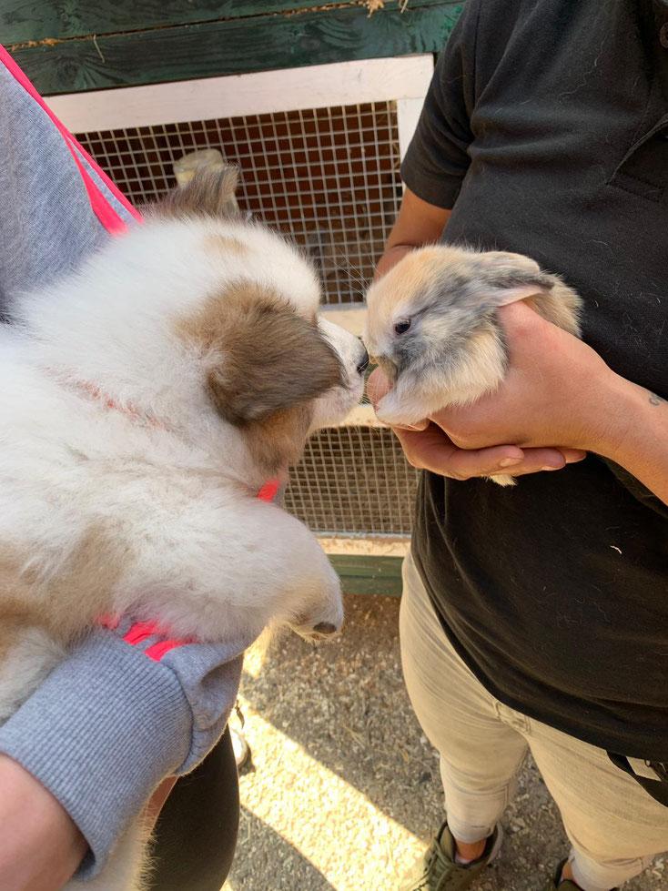 Ella maakt kennis met een jong konijntje