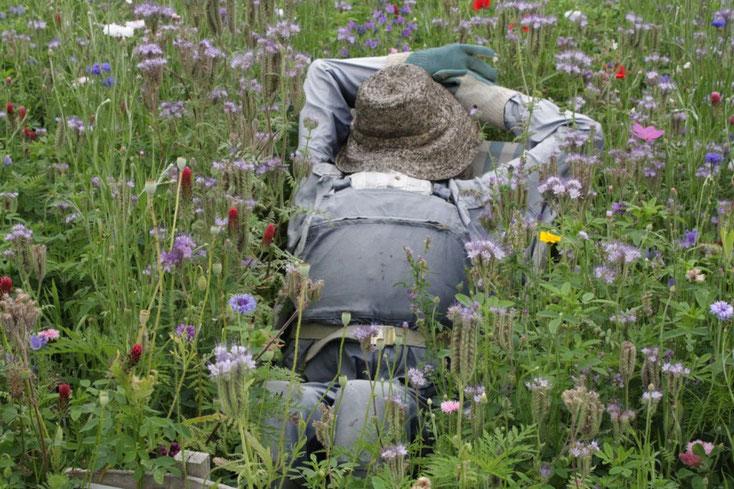 sieste dans la pelouse