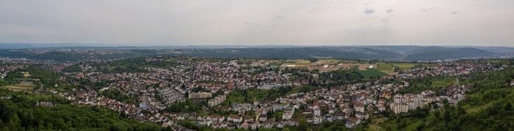 Apfelbäume entlang der Streuobstwiesen im Hochwiesenweg (Bildquelle: Streuobst)