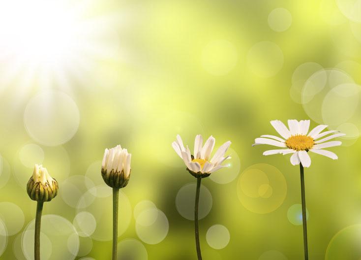 Symbolbild mit Blumen