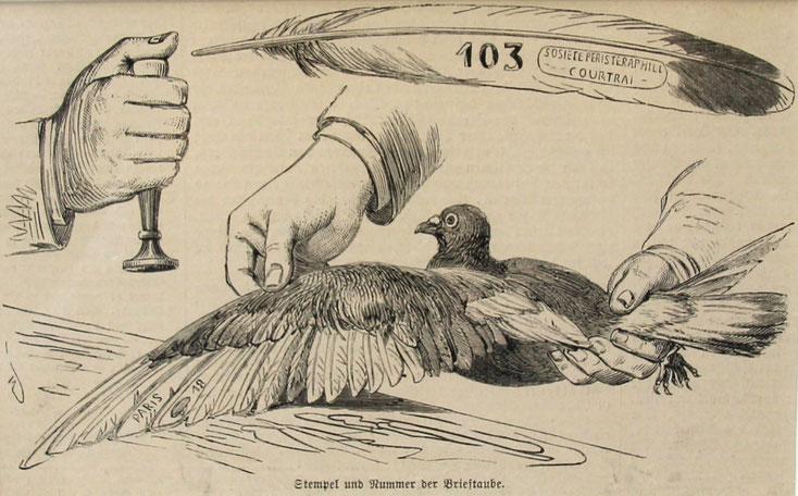 Brieftaube historisch, Stempelung, Konstatieruhr, Taubenuhr, Brieftaubenwesen, Brieftauben Uhr, Brieftauben Zeiterfassung