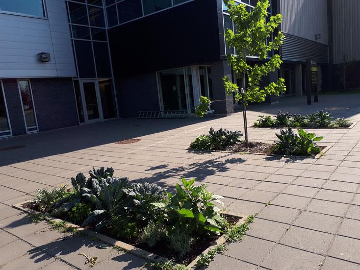 Photo des trois plates-bandes comestibles près de l'entrée n°4 du Collège Montmorency