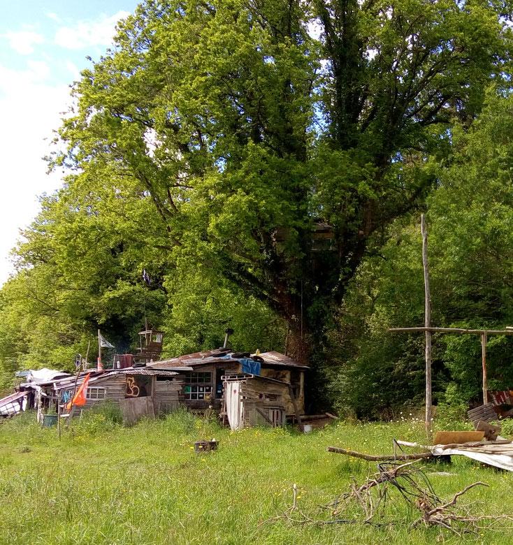 Une cabane dans un arbre - La Zad Notre-Dame-des-Landes - Mai 2018