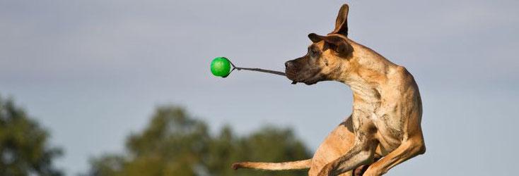 Chi è uno Lucky Loser - Mediazione cani in Alto Adige