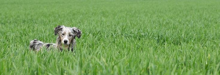 Hunde-Adoption in Südtirol
