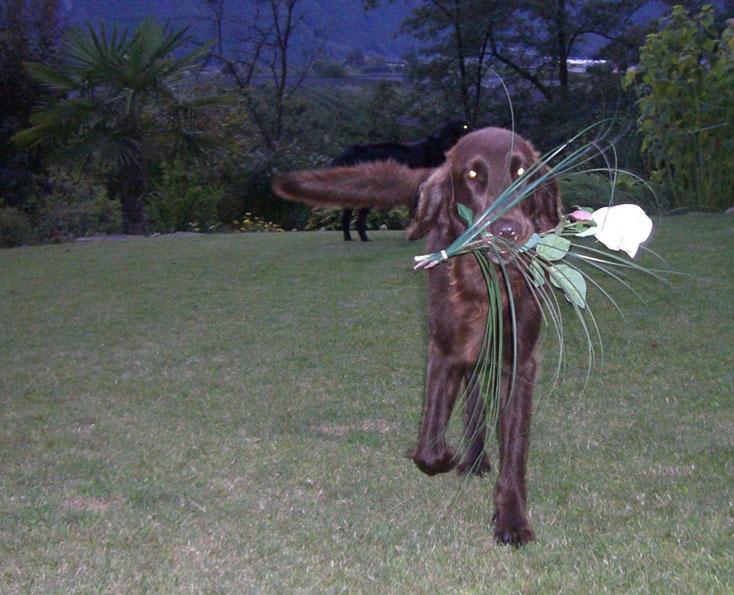 Wissenswertes und Unterhaltsames für Südtiroler Hunde und Hundehalter