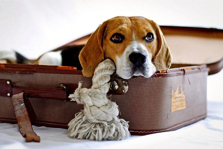 Hund zur Vermittlung anmelden