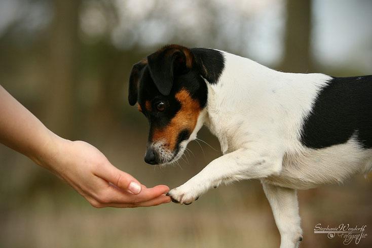 Vermittlung zwischen Hund und Mensch - in Südtirol