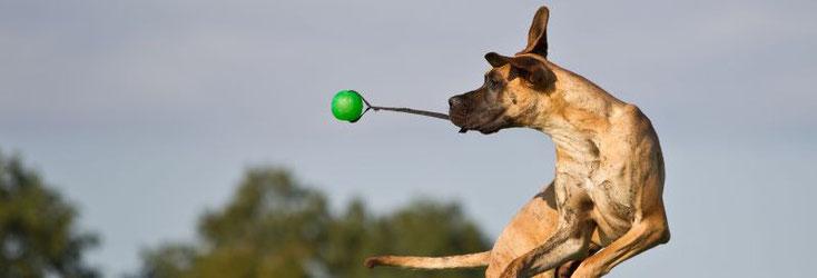 Jeder Hund hat eine zweite Chance verdient - in Südtirol