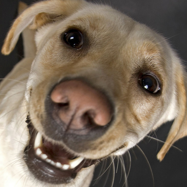Kontakt - Lucky Losers - Hundevermittlung Südtirol