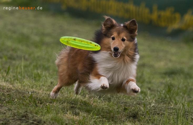 Lucky Losers - Eine zweite Chance - für Südtiroler Hunde