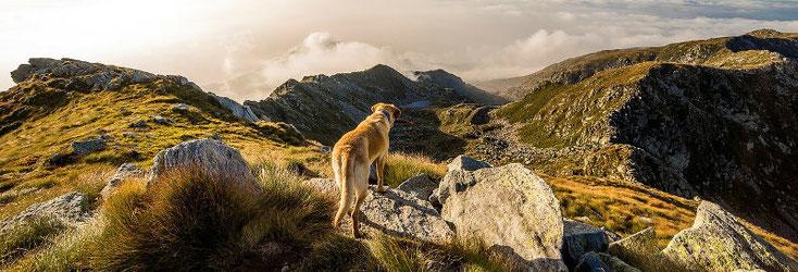 Cane ed uomo. Compagni per tutta la vitia - in Alto Adige
