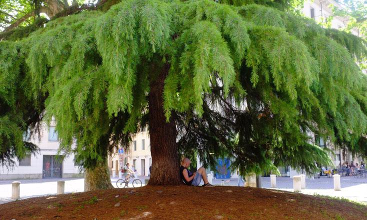 Beschützte Welt - auf dem Piazza Eremitani in Padua