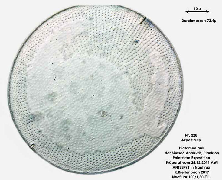 Bild 22 Diatomee aus dem anarktischen Ozean Präparat: ANT33/96; Gattung: Azpeitia sp.