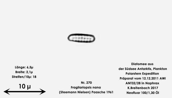 Bild 18 Diatomee aus dem anarktischen Ozean Präparat: ANT32/28; Art: Fragilariopsis nana (Steemann Nielsen) Paasche 1961